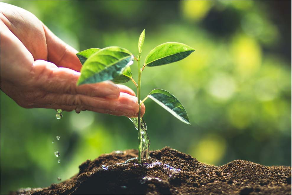 PLPT บริจาคกล้าไม้เพื่อการพัฒนาที่ยั่งยืน